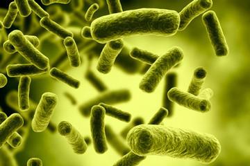 Lựa chọn Probiotics thế nào cho hiệu quả trong chăn nuôi