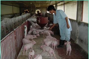 Cổ phiếu CTCP Giống gia súc Hà Nội không có giao dịch ngày chào sàn UPCoM