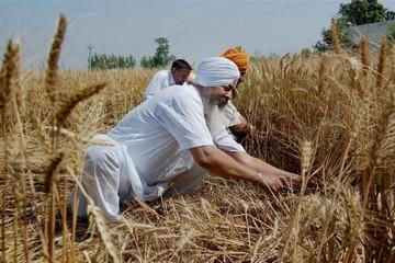 Nước xuất khẩu lương thực thứ hai thế giới đang phải tăng cường nhập khẩu lúa mỳ