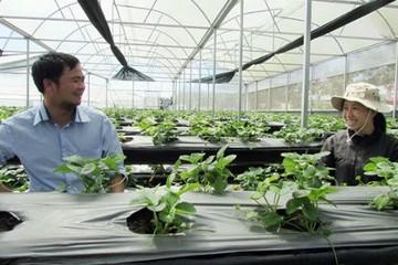 """Đầu tư vào nông nghiệp: Để DN không """"bỏ của chạy lấy người"""""""