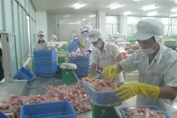 Nafiqad phát hiện 134 lô cá tra có chất kháng sinh cấm