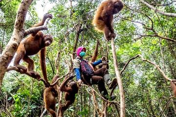 Ngân hàng tiếp tay phá rừng ở Indonesia