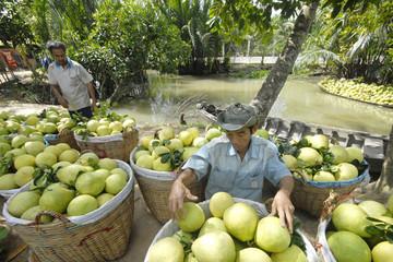 Xuất khẩu rau quả vượt kế hoạch