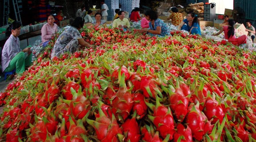 Xuất khẩu ngành nông nghiệp đạt mức cao kỷ lục 32,1 tỷ USD