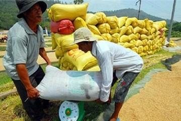 Ngành lúa gạo Việt Nam: Năm 2016 u ám và cảnh báo tương lai...