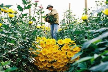 [Infographic] Điểm danh những làng hoa đẹp quên lối về ở Hà Nội