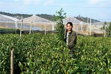 Giá thuê lao động một ngày ở Đà Lạt lên cả triệu đồng