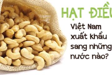 [Infographic] Hạt điều Việt Nam xuất khẩu sang những nước nào?