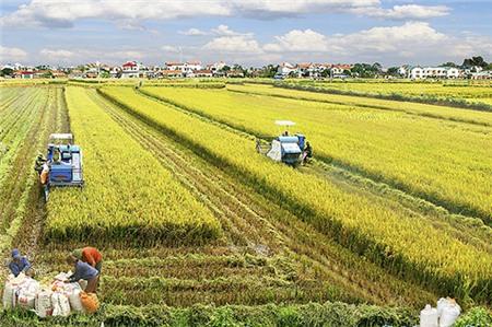 Nông nghiệp Việt Nam sẽ phục hồi trong năm 2017