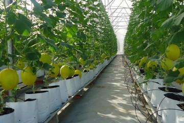 Gói 100.000 tỷ đồng cho nông nghiệp sẽ có lãi suất thấp hơn từ 0,5-1,5%