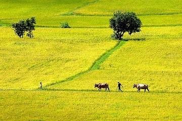 Những trường hợp nào được miễn thuế đất nông nghiệp?
