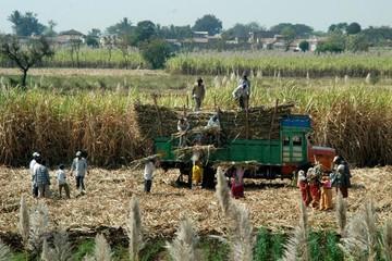 Ấn Độ: Giá đường tăng mạnh do hạn hán