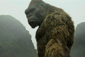 Kong: Skull Island kiếm được gần 143 triệu đôla sau 2 ngày ra rạp