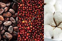 Triển vọng giá đậu tương tăng mạnh, sản lượng cà phê robusta vẫn