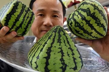 Dưa hấu giá 27.000 USD: Nhìn vào thói quen ăn uống cao cấp của Nhật Bản