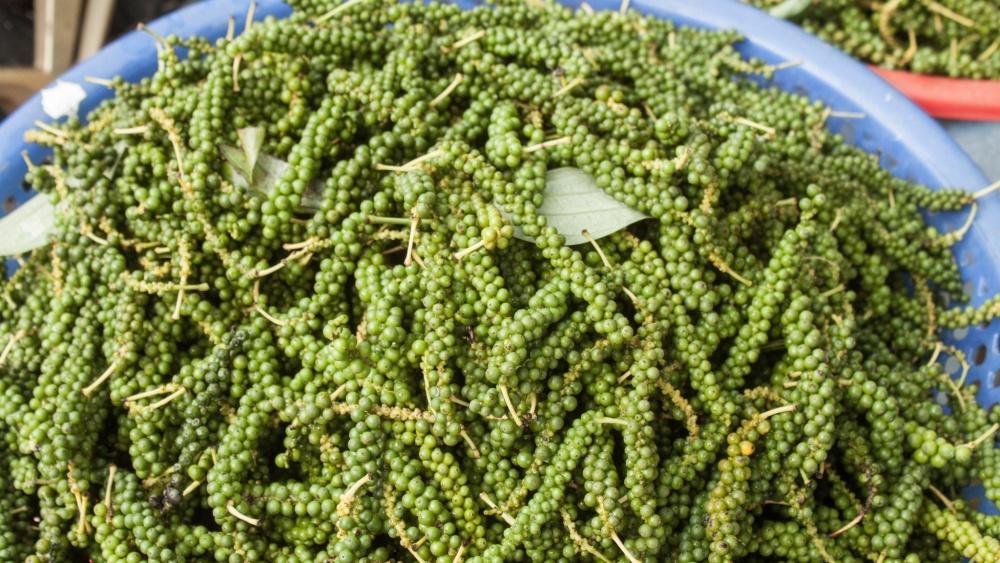 Thất vọng với cây cà phê, Brazil chuyển sang trồng tiêu đen