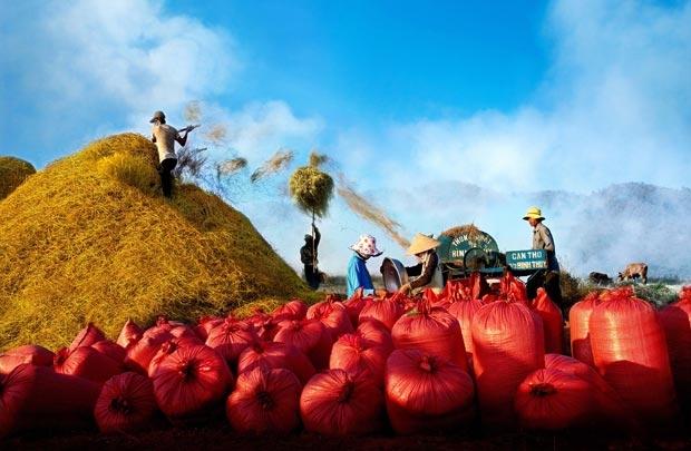 Xuất khẩu nông nghiệp Việt Nam mang về 7,6 tỷ USD trong quý 1