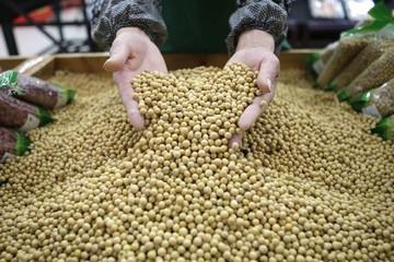 Trung Quốc bất ngờ giảm nhập khẩu đậu tương có thể khiến giá giảm mạnh