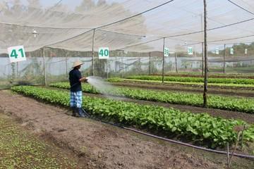 Nông sản hữu cơ, mạnh ai nấy làm