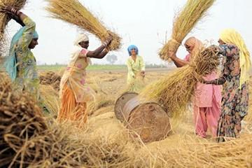 Ấn Độ xóa nợ 5,6 tỷ USD cho nông dân