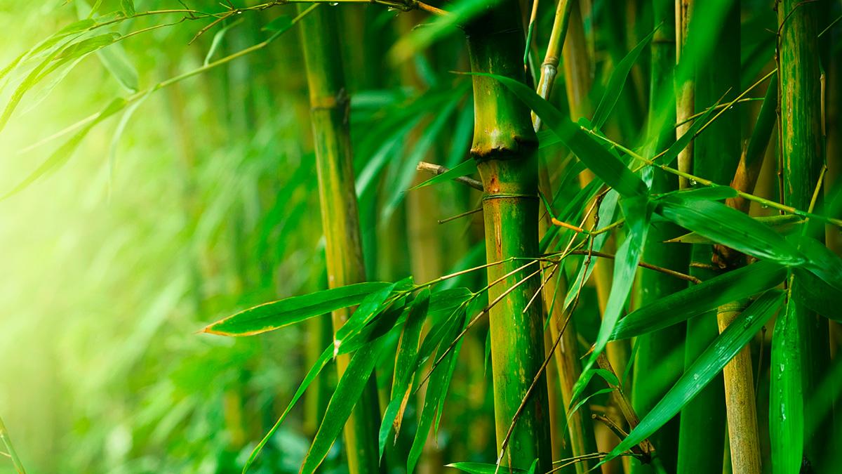 Thành Vũ Tây Ninh bán thành công thêm 630.000 cổ phần Bamboo Capital