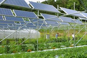 Sinenergy Holdings đề xuất đầu tư nhà máy điện năng lượng mặt trời tại Ninh Thuận