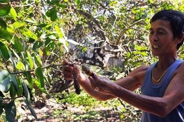 Đồng Nai: mưa trái mùa gây thiệt hại 1.400 tỉ đồng