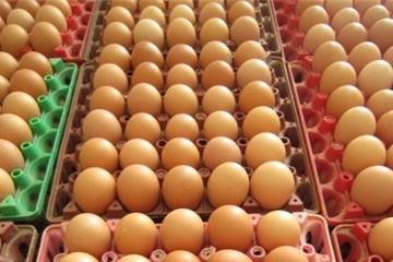 Nắng nóng, giá trứng tăng liên tục