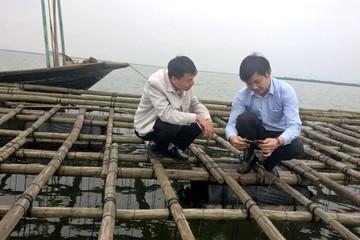 Hàu chết hàng loạt tại Quảng Ninh, thiệt hại hơn 80 tỉ đồng