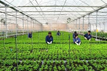 NHNN chính thức có hướng dẫn về tín dụng nông nghiệp công nghệ cao