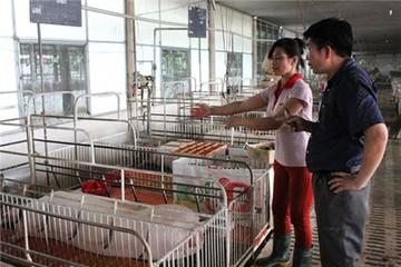 Giá lợn của dân 22.000 đồng/kg, siêu thị 100.000 đồng/kg, vì sao?