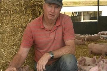 Nông dân Úc phải bắn bỏ đàn lợn vì rớt giá không phanh