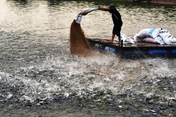 Chính phủ yêu cầu cá tra thương phẩm đáp ứng đầy đủ 4 điều kiện