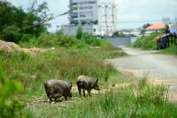 """Ảnh: Cò đất tháo chạy vì siêu dự án bất động sản 6 tỷ USD Saigon Peninsula """"bất động"""""""
