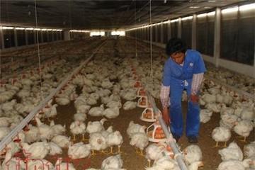 Nối tiếp chuối và thịt heo, nhà nông Đồng Nai đang chờ 'giải cứu' trứng gà