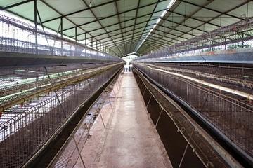 Thảm cảnh nông nghiệp Venezuela