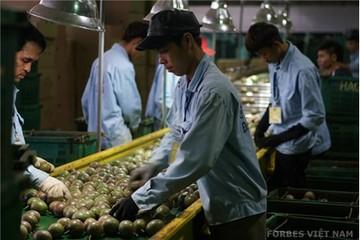 Hoàng Anh Gia Lai với tham vọng cây ăn quả