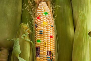 Diện tích cây trồng biến đổi gen tăng 110 lần có thực sự là điều đáng lo ngại?