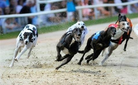 Công ty Hong Kong ngưng tham gia kinh doanh đua chó và đua ngựa tại Việt Nam