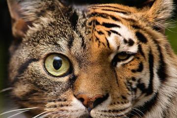 GS. Harvard: Việt Nam muốn làm mèo hay hổ của châu Á?