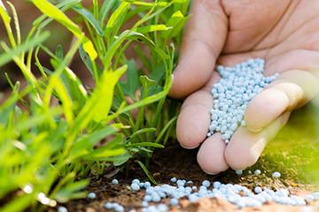 Nhập khẩu phân bón, thuốc trừ sâu Trung Quốc tăng vọt