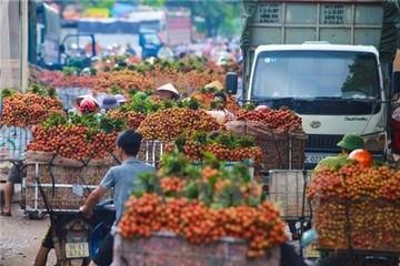 20.000 tấn vải thiều Việt Nam xuất khẩu sang Trung Quốc