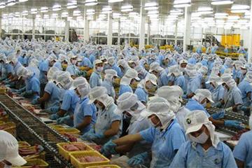 Nam Việt (ANV): 6 tháng lãi 53 tỷ đồng khả quan hơn khoản lỗ lớn cùng kỳ