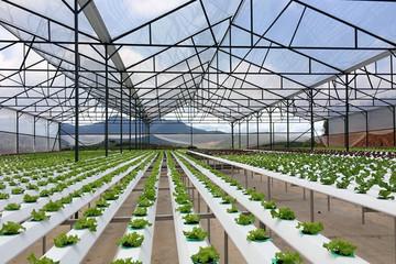 Chính sách khuyến khích doanh nghiệp đầu tư vào nông nghiệp