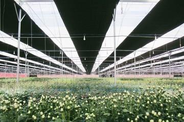 PAN SALADBOWL là DN duy nhất ngành trồng hoa đạt Global GAP và chứng nhận khoa học công nghệ