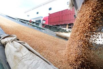 Chỉ số giá lương thực toàn cầu chạm mức cao nhất kể từ đầu năm 2015