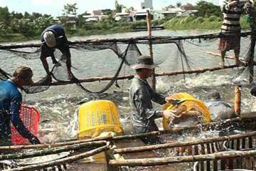 Nếu không thay đổi, tôm xuất khẩu Việt Nam sẽ mất dần thị phần và lâm vào tình trạng