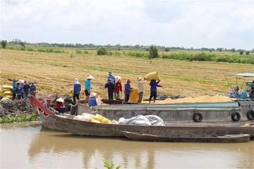 Giá lúa gạo tăng sau trúng thầu bán gạo cho Philippines