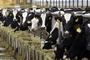 Giá nông sản đạt kỷ lục kể từ tháng 1/2015