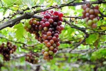 Ninh Thuận khuyến khích đầu tư công nghệ bảo quản nông sản